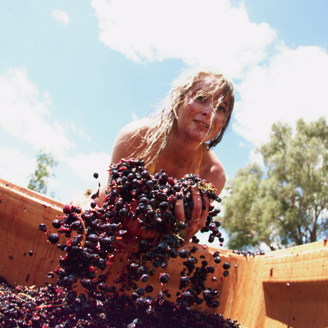 Insider Secrets: Fun Fall Facts About Wine – 10 Facts About Grape Harvest Festivals