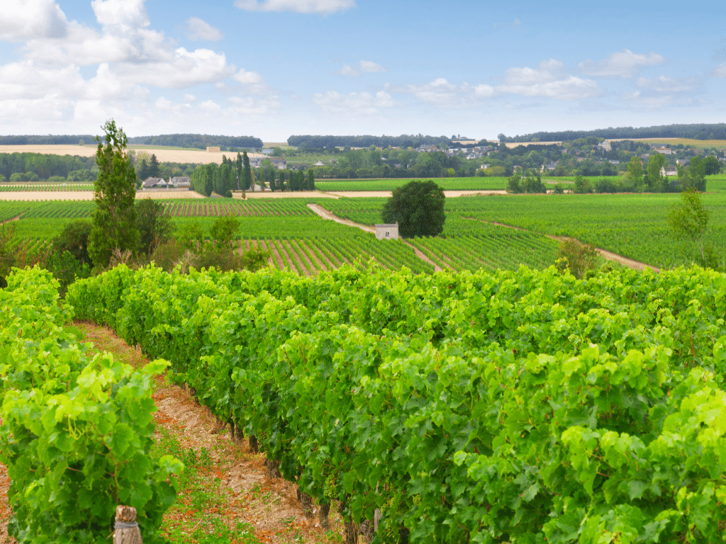 Wine Regions: Loire Valley